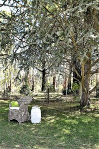 outdoors with chair and large tree